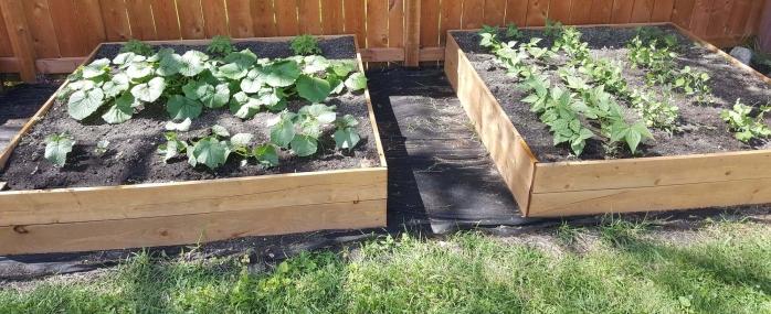 vegetable garden dividend investing stocks